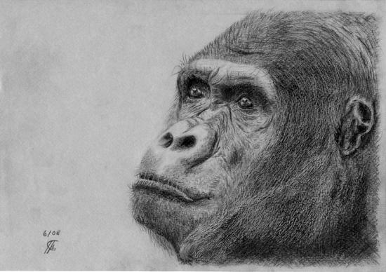 King Kong by kofkof